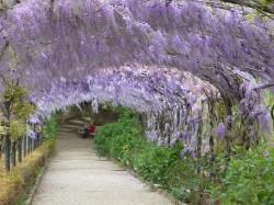 Bardini garden by Antonella Massa