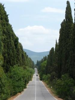 Viale dei Cipressi Bolgheri by Wikipedia