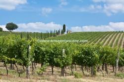Chianti Classico region
