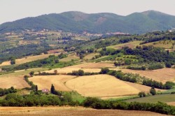 Surroundings of Pisa in summer Colline Pisane