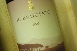 Bolgheri Wine: Bruciato