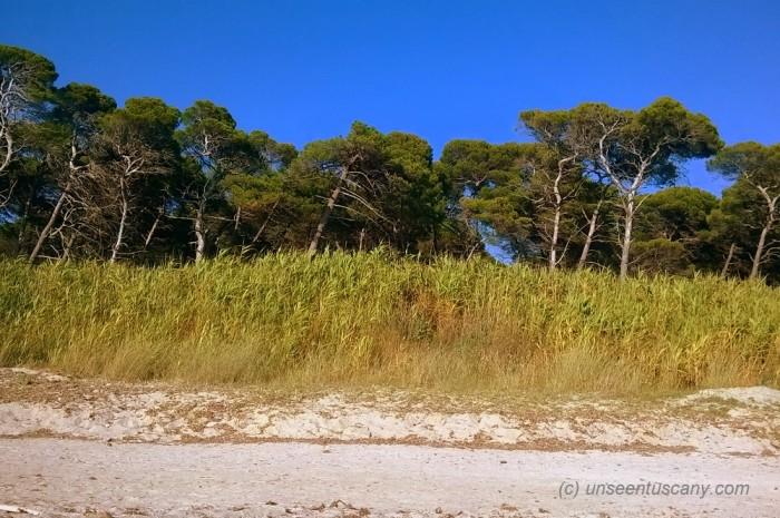 Free Mazzanta beach (3)