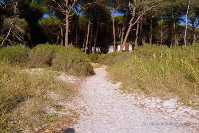 Free Mazzanta beach (5)