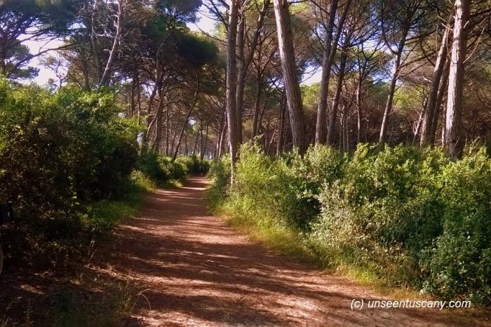 Free Mazzanta beach (6)
